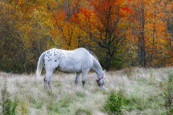 horseglow